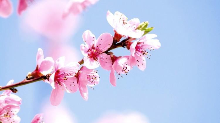 rencontre site conseiller Cherry Blossom service lignes de ramassage pour les rencontres en ligne